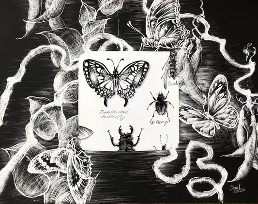 nightmares of a butterfly