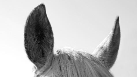 Naughty ears