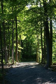Sentier pour marcher