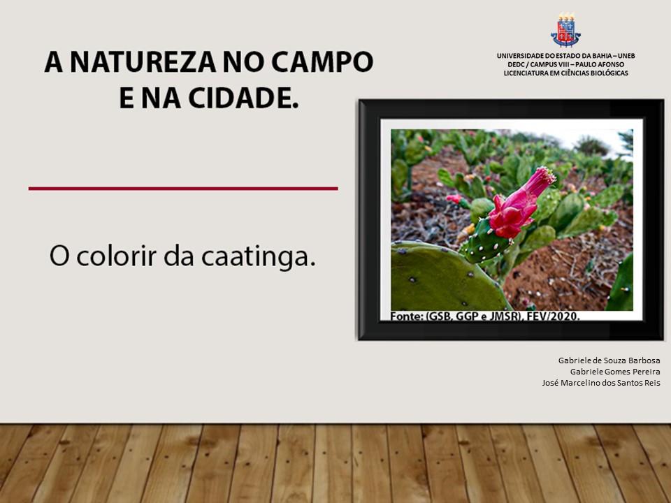O colorir da Caatinga