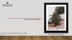 Natal com pinheiro