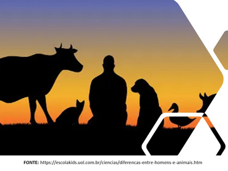 ANIMAIS SILVESTRES: BELEZA E BIODIVERSIDADE. Tomar cuidados e ao mesmo tempo, protegê-los.[1]