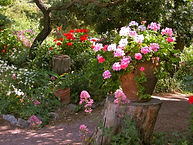 fleurs jardin B.jpg