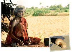 'Cashew'_India