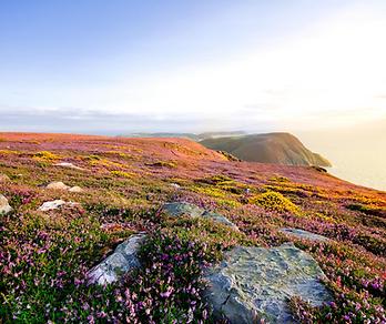 Isle of Man, Bay Farm Tours (1).png