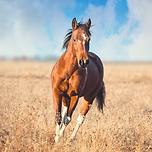 Bay Farm Tours Horse