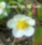 126495974_edited.jpg