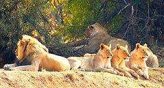 Lion_Park_düzenlendi.jpg