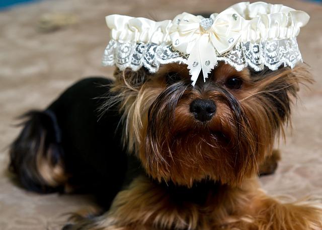 puppy-1786288_640