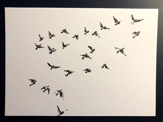 Vögel - Postkarte