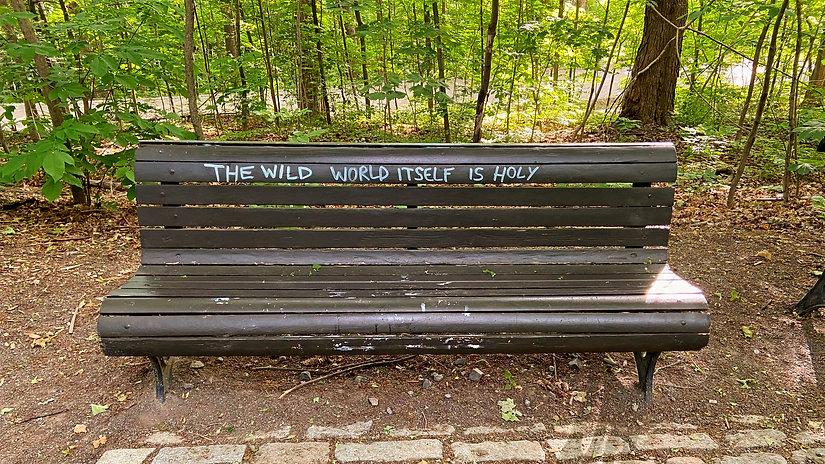 WILD LIFE.jpg