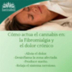 cannabis y fibromialgia dolor cronico.jp