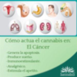 cannabis_y_cáncer.jpg