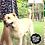 Thumbnail: Lazo en cáñamo para mascotas