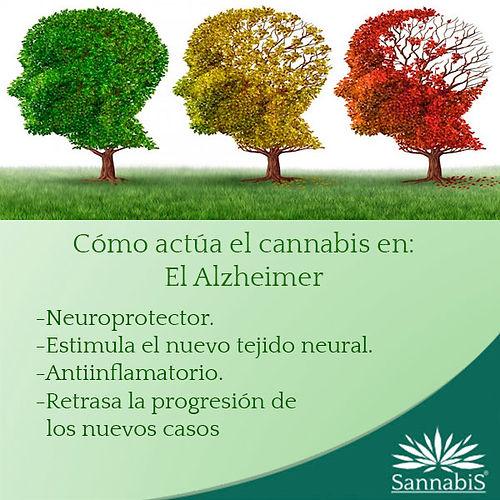 cannabis y alzheimer.jpg