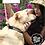 Thumbnail: Collar en cáñamo y cuero para mascotas