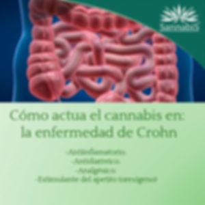 cannabis y enfermedad de crohn.jpg