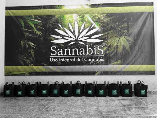 Sannabis contribuyendo en la lucha contra el tráfico de marihuana!