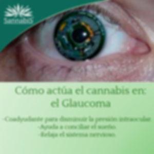 cannabis y glaucoma.jpg