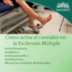 cannabis y esclerosis multiple.jpg