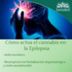 cannabis y epilepsia.jpg