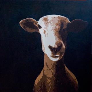 THIN SHEEP