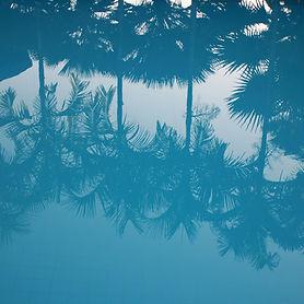 Reflexão de palmeiras