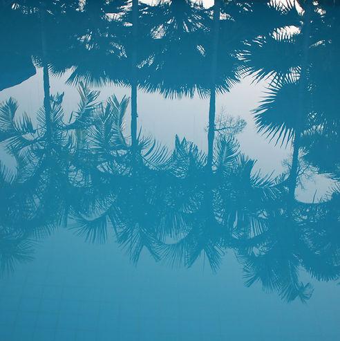 Reflexión de las palmeras