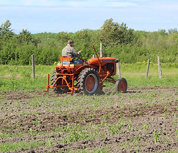cultivating corn