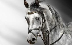 Solution de litière pour chevaux