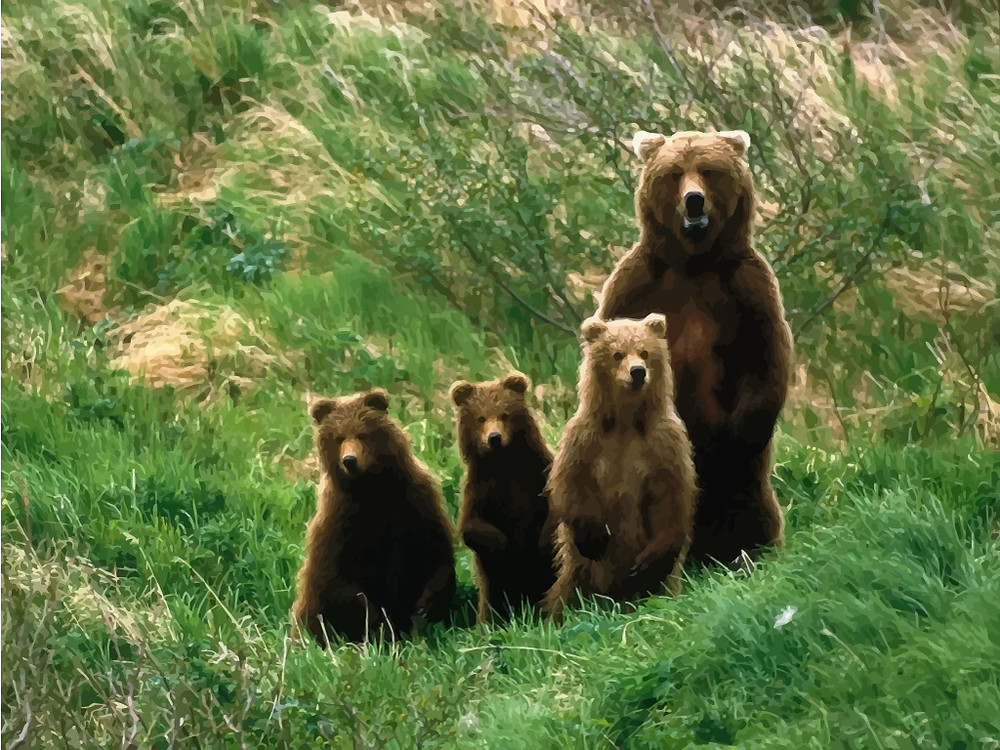 Mama Grizzly Bear with three cubs standing up and looking at camera.