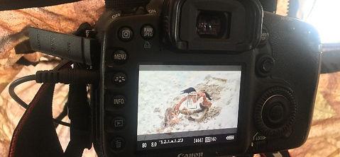 Cadreur-video-animalier-affut.jpg