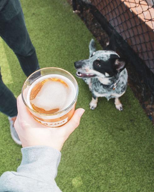 Metazoa_Beer_in_Dog_Park.jpg