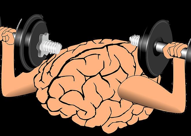 brain-1295128_1280.png