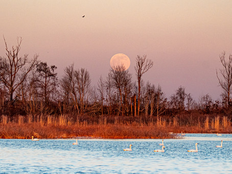 A trip to Pungo Lake, a remote area of Eastern North Carolina along the Coastal Plain.