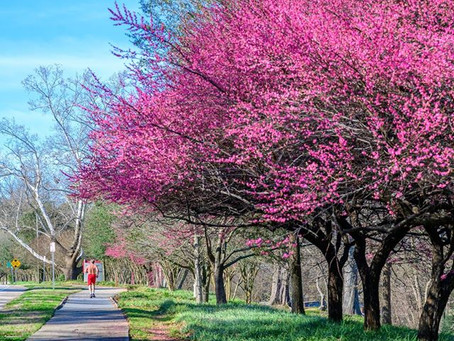 Early Spring in North Carolina?
