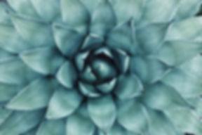 erol-ahmed-80094-unsplash.jpg