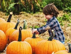 Pumpkin picking .jpg