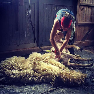 Emily Shearing .jpg