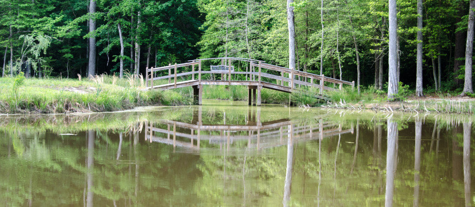 Pond Bridge.jpg