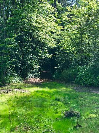 picnicgreenwoodspath.jpeg