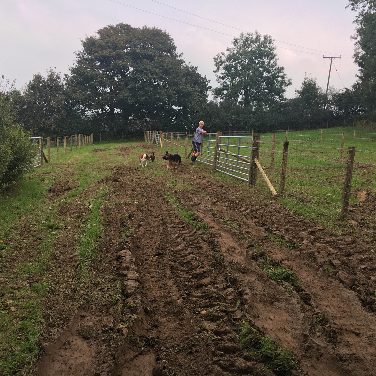 Newly completed paddocks