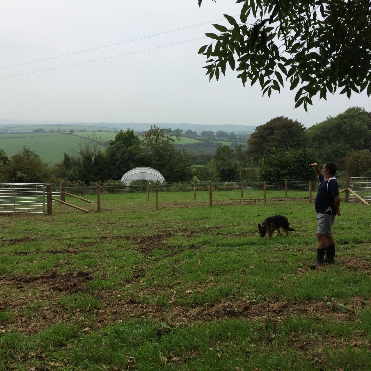 Chosen as the first pig paddock