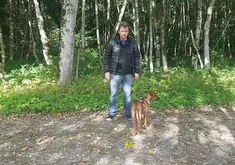 Hund, 10 Leckerli-Spiel