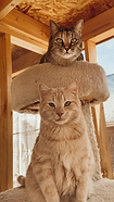 catcottage.png