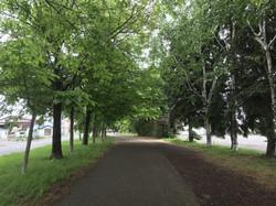 北の遊歩道