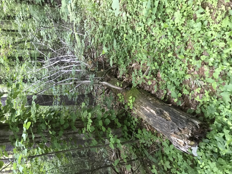 森の危険、支障木処理の調査