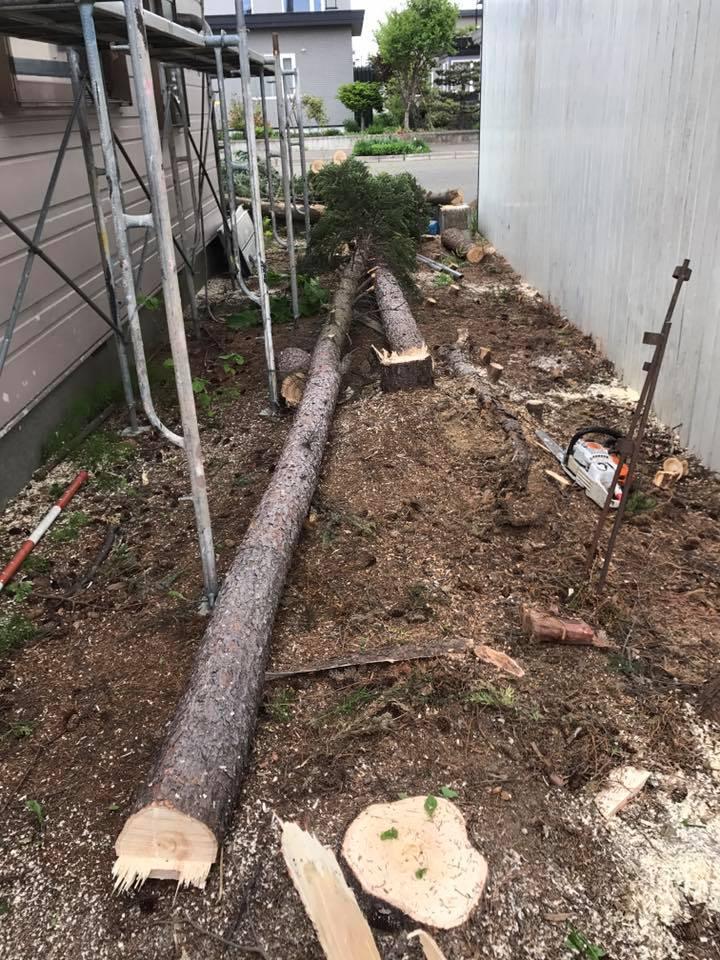 庭木の伐採。