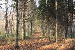 突哨山の多様な森林を案内