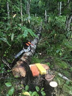 危険木処理